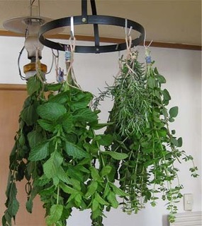 herb1.jpg