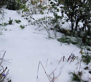 snowgarden.jpg